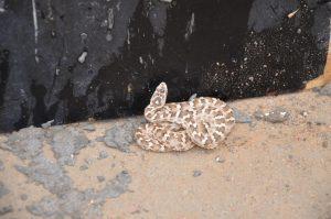 Der Naga Besuch – Schlangen sind ein Symbol der Weisheit
