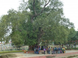 Pilgerreise Lumbini